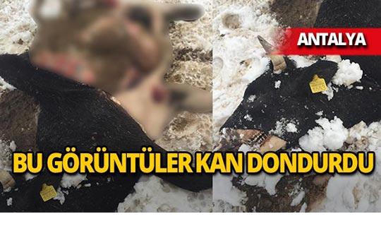 Antalya'da soğuk ve açlıktan telef oldular!