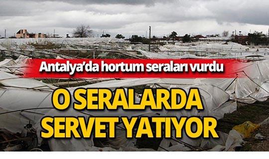 Antalya'da seraların içerisinde servet yatıyor!