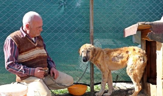 Köpek oteli açtı, yaralı ve hasta sokak hayvanlarından müşterilere yer kalmadı