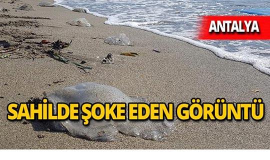 Antalya'da sahile vurdu, gören şoke oldu!