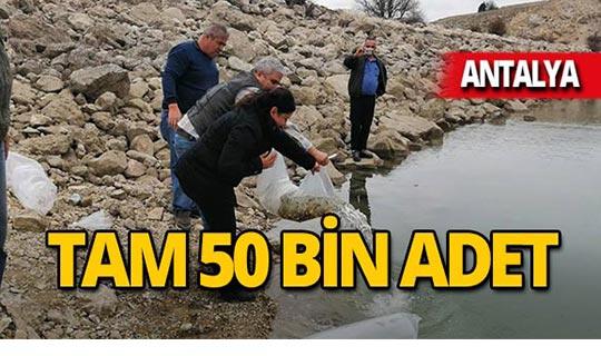 3 gölete 50 bin adet bırakıldı!