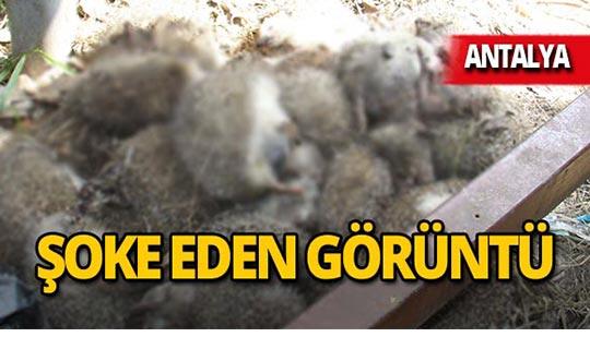 Antalya'da 25 tanesi ölü bulundu!
