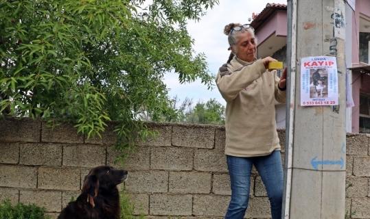 Kaybolan köpeğini 25 kilometrelik alanda diğer köpeklerle birlikte arıyor
