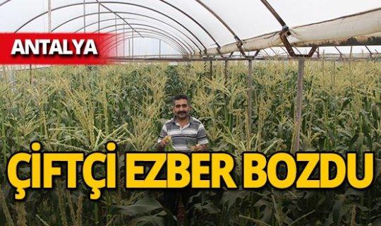 Antalya'da çiftçinin yüzü güldü!