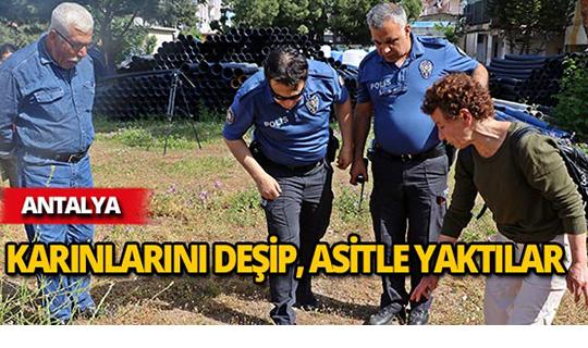 Antalya'da katliam!