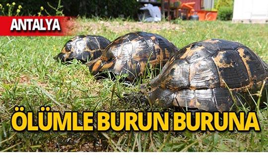 Antalya'da asfalt eridi, ölümle burun buruna kaldılar!