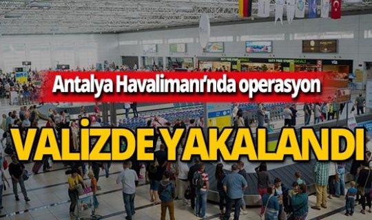 Antalya Havalimanı'nda valizde yakalandı!