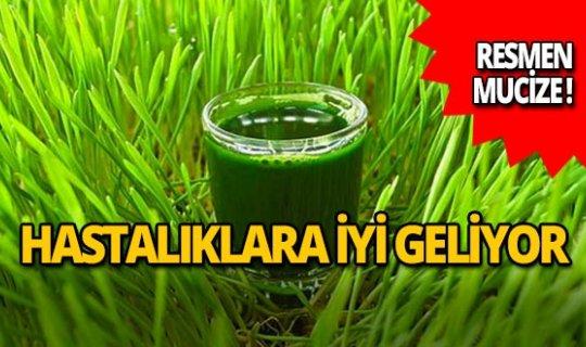 Mucize besin: Buğday çimi