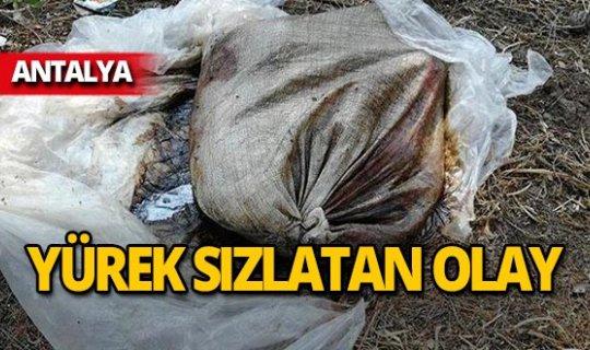 Antalya'da korkunç olay! Ölüme terk ettiler