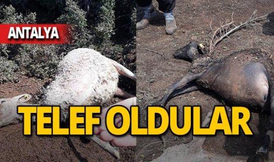 Antalya'da sel büyük zarar verdi!