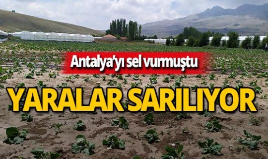 Antalya'da sel sonrası yaralar sarılıyor!