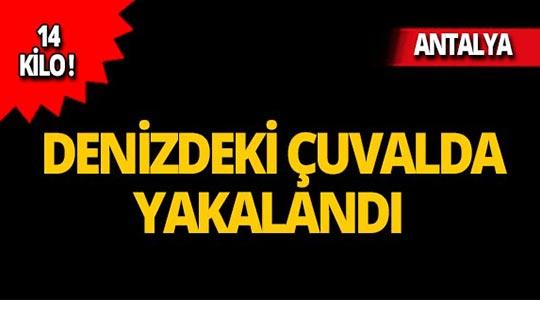 Antalya'da şok! Hepsi kıyıya vurdu