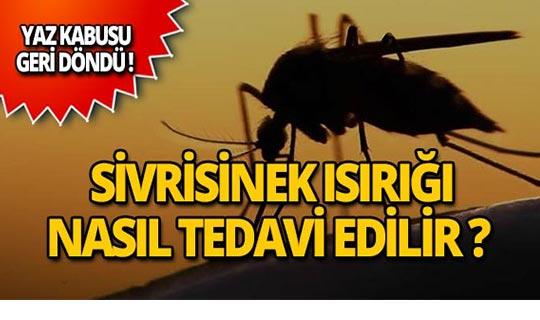 Sivrisinek ısırığı nasıl geçer? Tedavi yöntemleri
