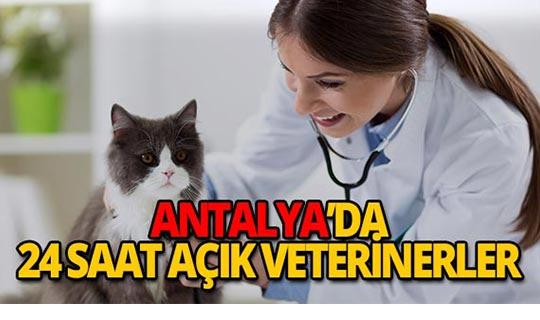 Antalya'da 24 saat hizmet veren veteriner klinikleri