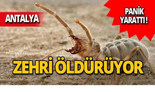 Antalya'da panik yarattı: Zehriyle insanları öldürüyor!