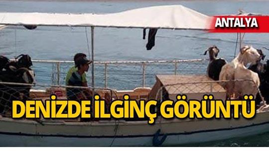 Kurbanlıkları tekne ile taşıdılar!