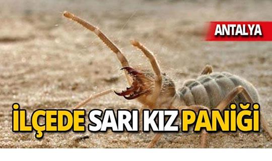 Antalya'da görüldü! İnsanların üzerine atlıyor