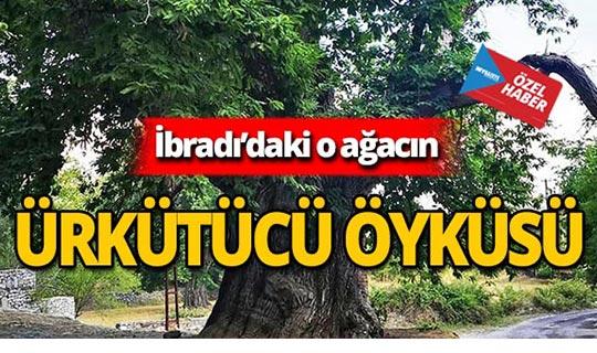 Antalya İbradı'daki kestane ağacının tüyler ürperten öyküsü