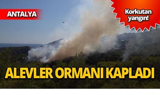 Orman yangını! Ağaçlar kül oldu