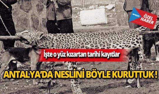 Antalya'da neslini böyle kuruttuk