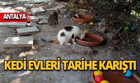 Kediler evsiz kaldı