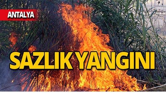 Tehdit eden sazlık yangını!
