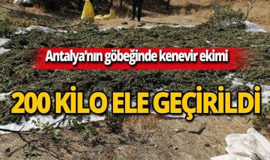 Antalya'da zehir tacirlerine darbe!