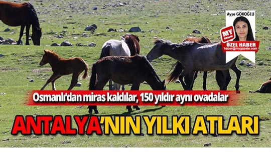Antalya'nın yılkı atları