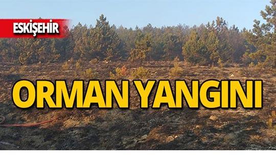 Orman yangınında 1,5 hektarlık alan zarar gördü!