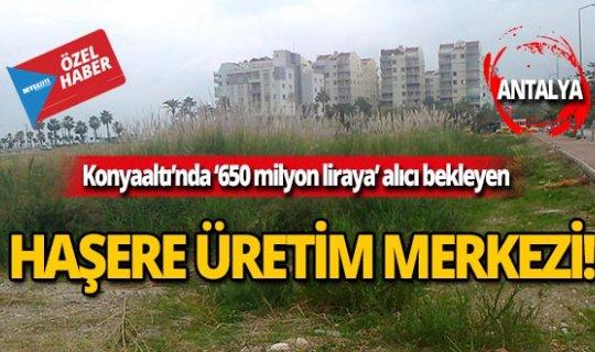 650 milyon liralık yer haşere üretime merkezine dönüştü!