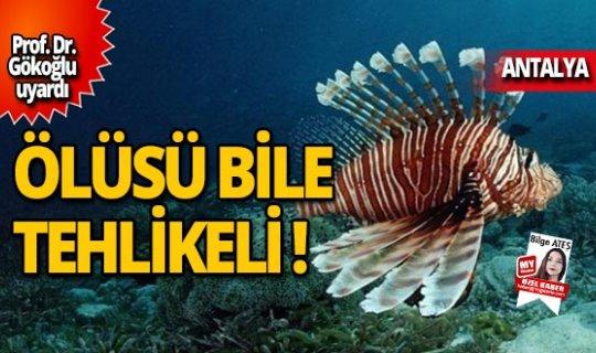 Antalya'da hızla yayıldı, Prof. Dr. Gökoğlu uyardı!