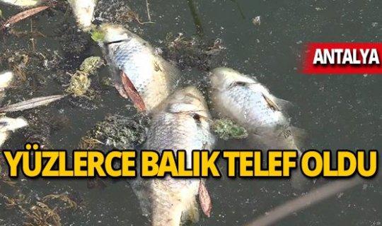 Yüzlerce balık oksijensizlikten mi öldü?