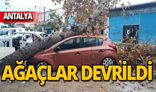 Antalya'da şiddetli fırtına! Ağaçlar devrildi