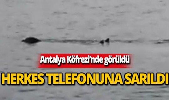 Antalya Körfezi'nde görüldü! Herkes telefonuna sarıldı