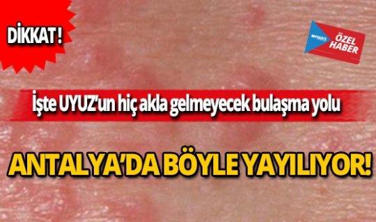 Uyuz Antalya'da böyle yayılıyor!