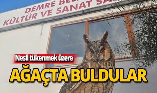 Nesli tükenmek üzere olan hayvan Antalya'da bulundu