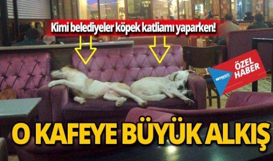 O kafede köpeklere işte böyle davranılıyor