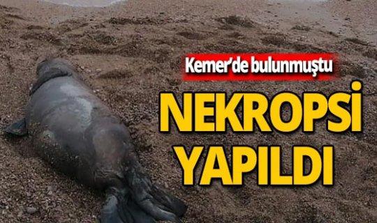 Ölü bulunmuştu, nekropsi yapıldı