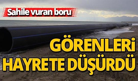 Antalya sahilinde herkesi şaşırtan olay!