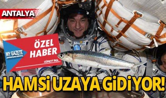 Hamsi uzaya gidiyor!
