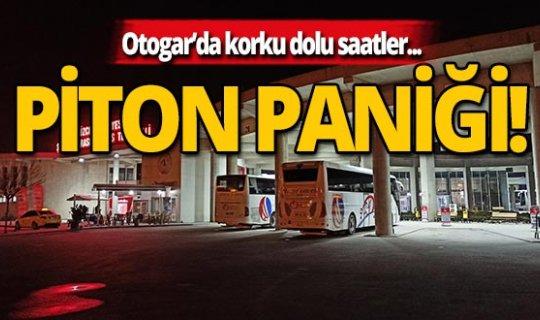 Otogar'da Piton paniği!