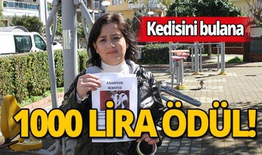 Kedisini bulana 1000 lira ödül verecek!