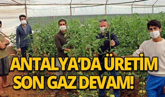 Antalya'da üretim son gaz devam ediyor