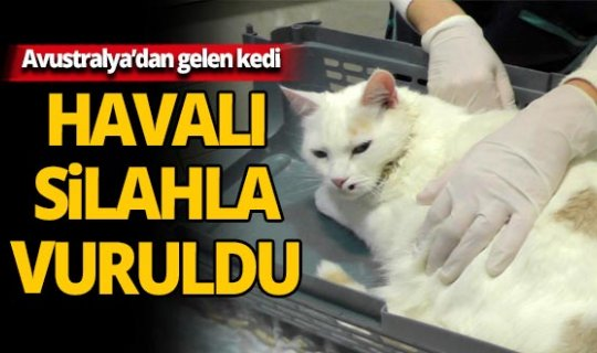 Antalya'da vurulan kedi için soruşturma açıldı