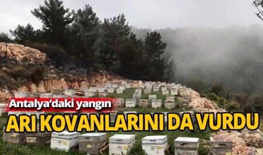 Antalya'daki yangın arıları da telef etti