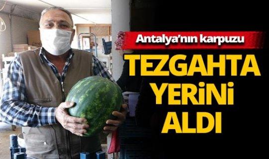 Antalya'nın karpuzları Adapazarı'na gönderiliyor