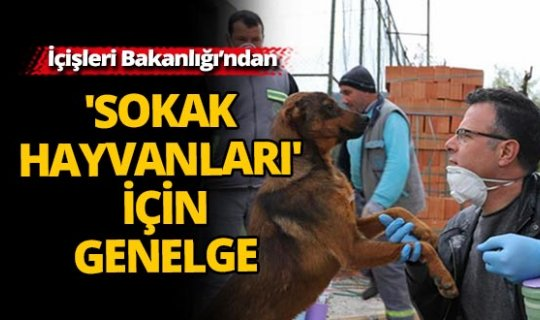 İçişleri Bakanlığı'ndan 'Sokak Hayvanları' konulu genelge