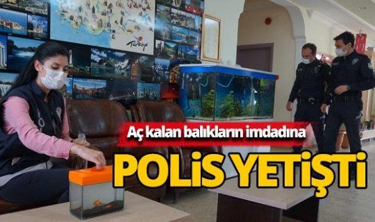 Okulda aç kalan balık ve köpeklerin imdadına polis yetişti