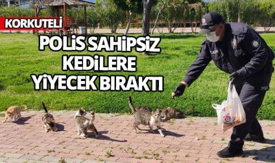 Polis sahipsiz kedilere yiyecek bıraktı