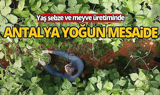 Yaş sebze ve meyve üssü Antalya'da üreticiler yoğun mesaide